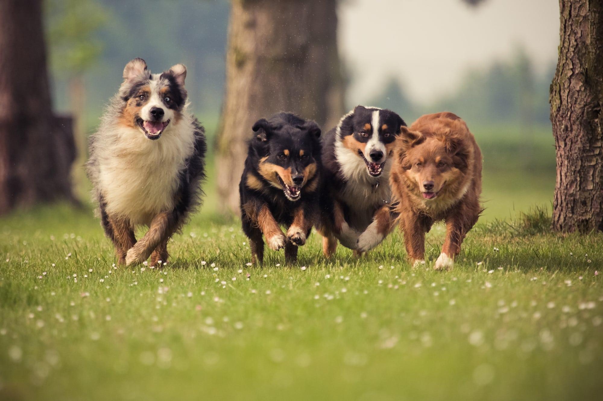 9 Tipps & Warnungen für eine gute Hundeerziehung