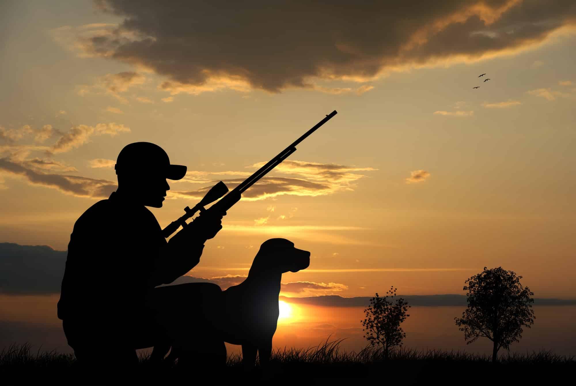 Jagdschein machen: Alles Wissenswerte zur Jägerprüfung