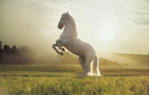 pferd frau und schwein mann