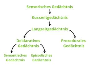 Sensorisches-Gedächtnis-Kurzzeitgeächtnis-Langzeitgedächtnis-Deklaratives-Gedächtnis-Prozedurales-Gedächtnis-Semandtisches-Gedächtnis-Episodisches-Gedächtnis-Struktur